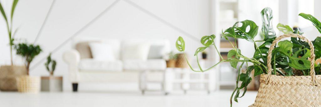 hygge indoor plantssml
